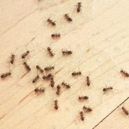 Ants on the floor of a kitchen.