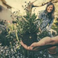 planting-in-garden