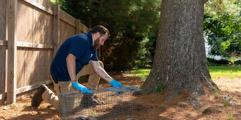 Exterminator from Clancy Bros Pest Control using a baiting and trapping system for wildlife removal in Boston.