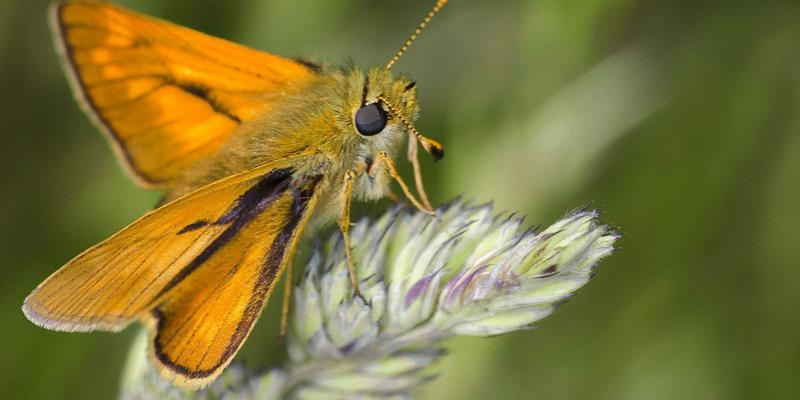 moth-on-plant